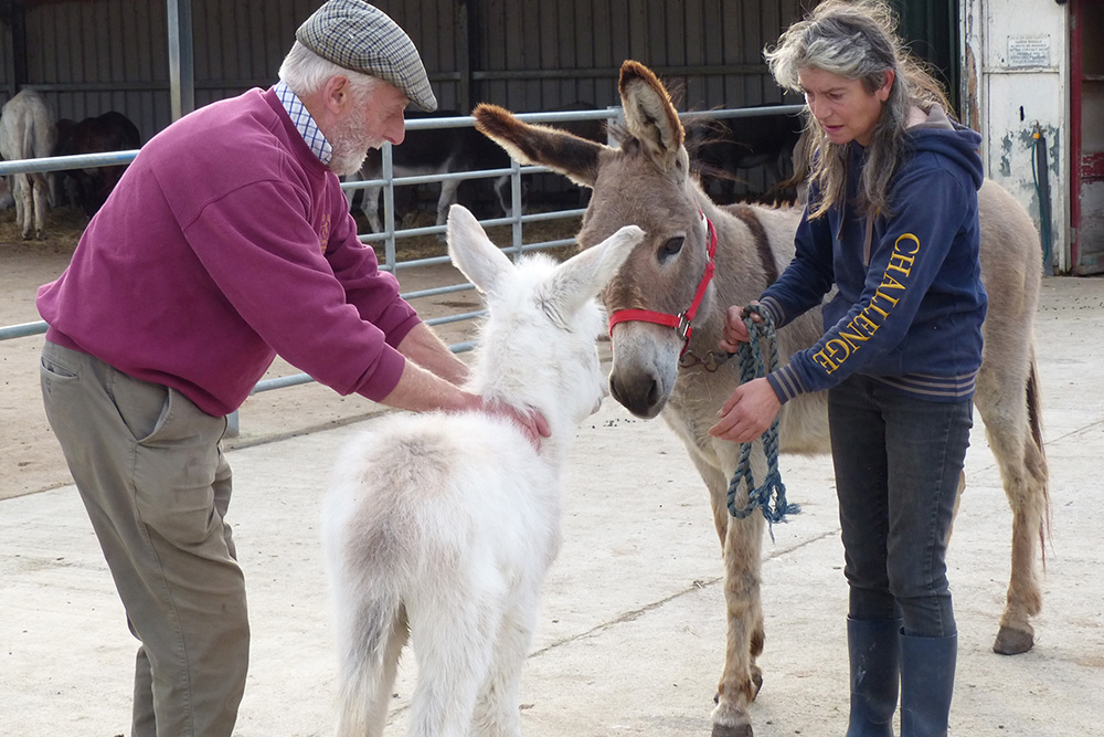 White Horse Show - Uffington - Oxfordshire - County - Country - Show - Donkey Sanctuary