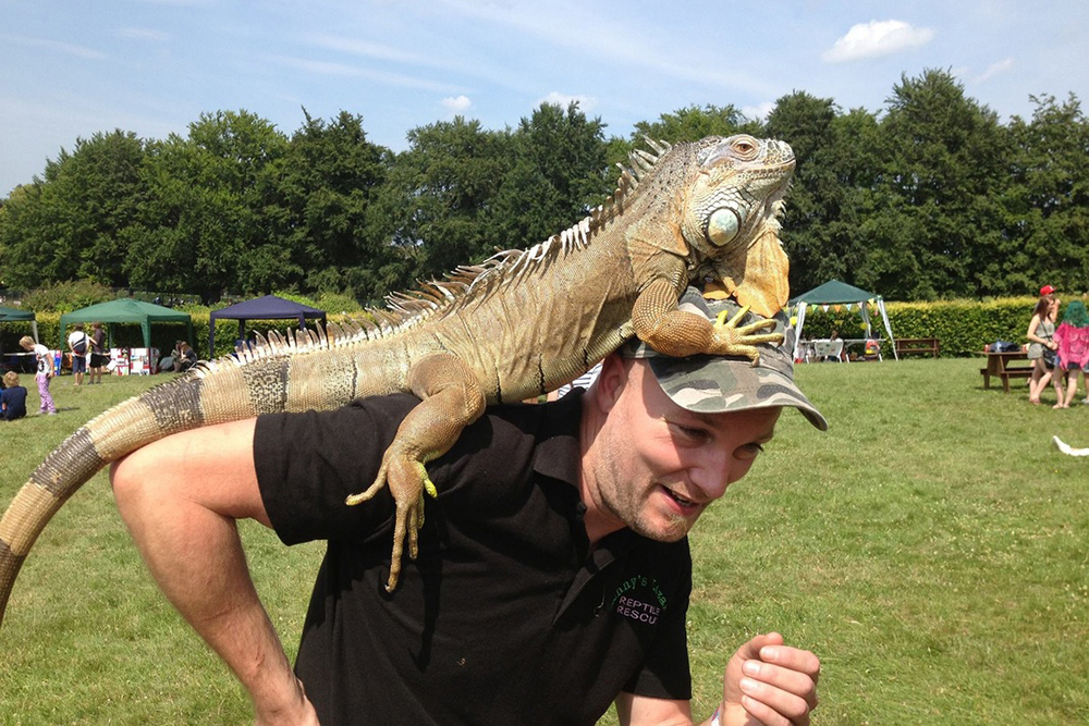 White Horse Show - Uffington - Oxfordshire - County - Country - Show - Lennys Lizzards
